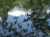 May 17 07 Local Lake Nutria-reflections-37.JPG
