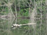 May 19 07 Critter Lake -079.JPG