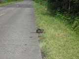 May 19 07 Critter Lake -099.JPG