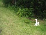 May 19 07 Critter Lake -101.JPG