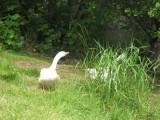 May 19 07 Critter Lake -105.JPG