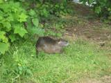May 19 07 Critter Lake -114.JPG