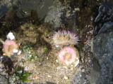 Ocean Life And Scenes