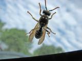 May 19 07 Wasp -019.JPG