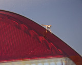 May 7 07 Roaming Wasp -030.jpg