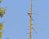 May 31 07 Critter Lake -059.jpg