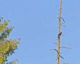 May 31 07 Critter Lake -061.jpg