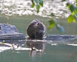 May 31 07 Critter Lake -102.jpg