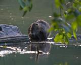 May 31 07 Critter Lake -105.jpg