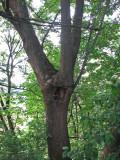 june 8 07 oaks bottom israel --04.JPG