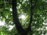 june 8 07 oaks bottom israel --05.JPG