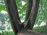 june 8 07 oaks bottom israel --07.JPG