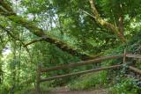Portland's Oaks Bottom Nature Preserve