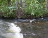 June 13 07 Johnson Creek Park -010.jpg