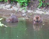 June 13 07 Johnson Creek Park -088.jpg