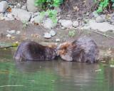 June 13 07 Johnson Creek Park -097.jpg