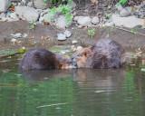 June 13 07 Johnson Creek Park -108.jpg