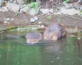 June 13 07 Johnson Creek Park -114.jpg