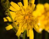 June 16 07 Forest Flowers -045.jpg