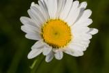 June 16 07 Forest Flowers -001.jpg