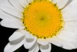 June 16 07 Forest Flowers -011.jpg