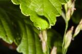 June 16 07 Forest Flowers -022.jpg
