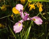 June 16 07 Forest Flowers -059.jpg