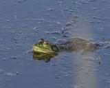 June 21 07 Ridgefield Wildlife Refuge -261.jpg