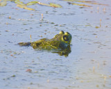 June 21 07 Ridgefield Wildlife Refuge -287.jpg