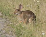 June 21 07 Ridgefield Wildlife Refuge -301.jpg