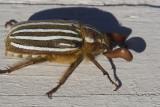 June 30 07 Bug Macros -_0001.jpg