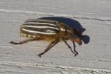 June 30 07 Bug Macros -_0003.jpg