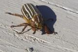 June 30 07 Bug Macros -_0004.jpg