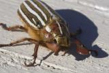 June 30 07 Bug Macros -_0006.jpg