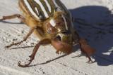 June 30 07 Bug Macros -_0009.jpg