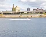 Portland Waterfront Waterfowl