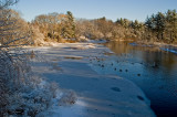 Ice and geese on the Sudbury river