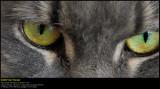 Cat Lifes (updated:2013-08-04)