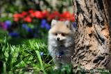 May1_13_042.jpg