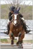 SELLE ANGLAISE SAUTS DE FACE  /  AHEAD JUMPS HORSE BACK RIDING