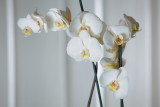 20130503 - Orchid