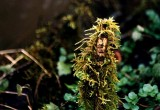 herb woman