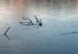 skeleton in frozen water