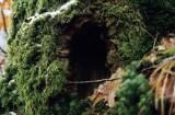 door of the tree-house