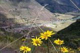Fleures Perou