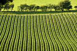 Another Ayrshire field pattern