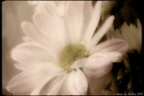 flower dreams ix