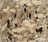 Just Weeds