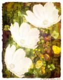 Lindsay's Flowers