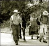 C & O Canal: Bringing Down the Mules